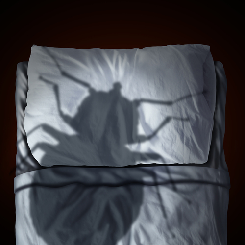 Bed Bug Removal